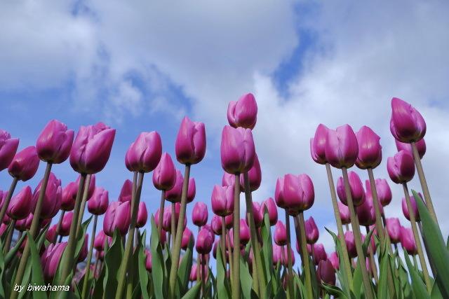 春の気分で_b0055171_22590203.jpg