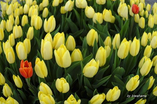 春の気分で_b0055171_23001030.jpg