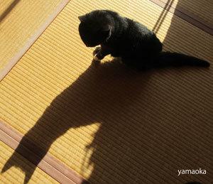 猫も目眩(めまい)を起こすらしい。_f0071480_17004863.jpg