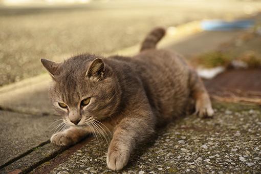 灯台猫たち2020.01.02_e0414191_06221397.jpg