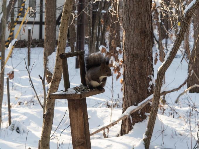エゾリス君が雪と戯れる・・穏やかな冬の一日。_f0276498_16063525.jpg