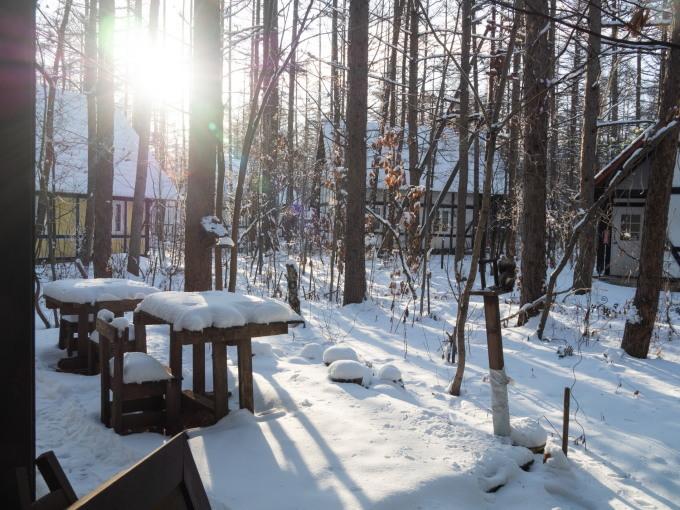 エゾリス君が雪と戯れる・・穏やかな冬の一日。_f0276498_16064513.jpg
