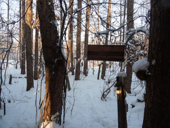エゾリス君が雪と戯れる・・穏やかな冬の一日。_f0276498_16065315.jpg