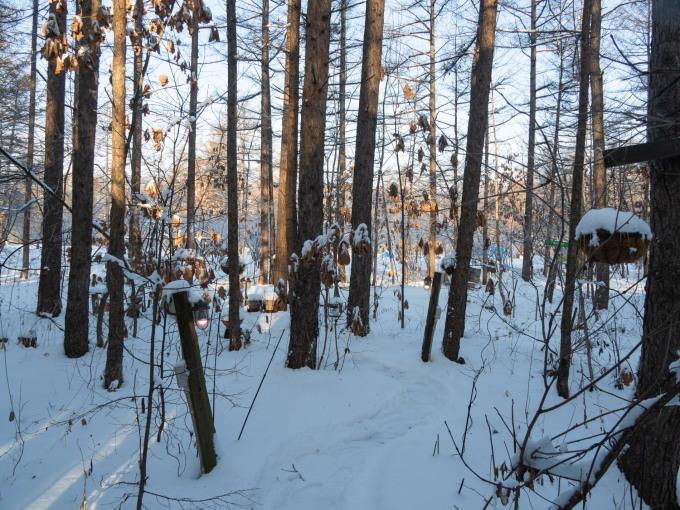 エゾリス君が雪と戯れる・・穏やかな冬の一日。_f0276498_16070026.jpg