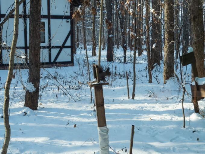 エゾリス君が雪と戯れる・・穏やかな冬の一日。_f0276498_16070789.jpg