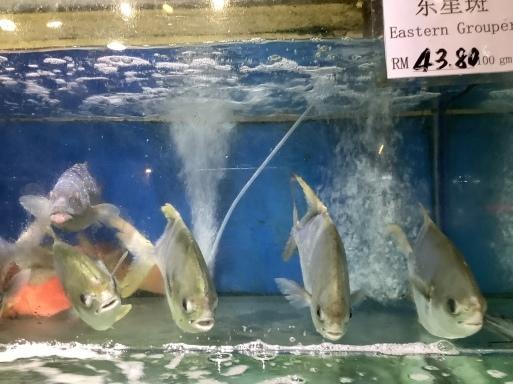 海鮮は蒸し鍋が流行り?_b0210699_22455365.jpeg