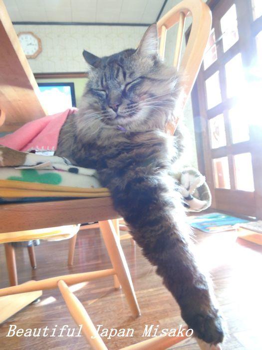 キリの初昼寝~♡♡♡🐱・゚☆、・:`☆・・゚・゚☆。_c0067206_18302339.jpg