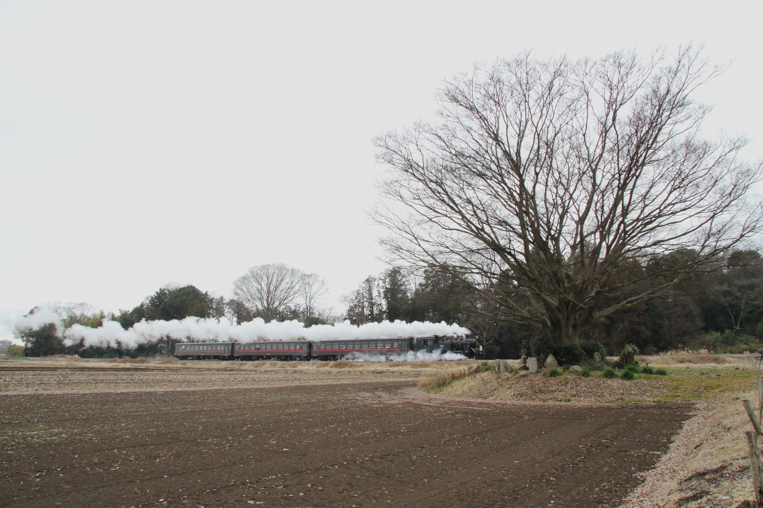 大欅の下に白煙一筋 - 2020年冬・真岡鉄道 -_b0190710_18500935.jpg