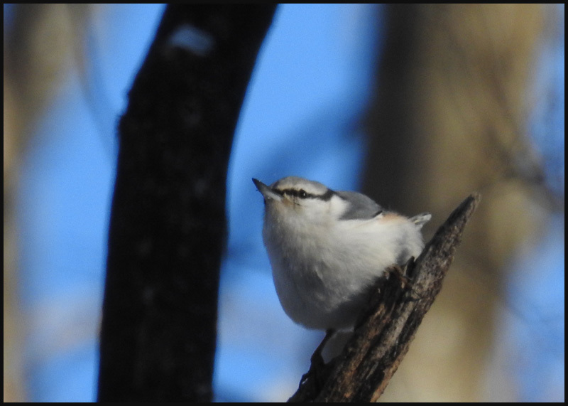 美しい羽をもつヤマゲラ_b0019313_17184853.jpg