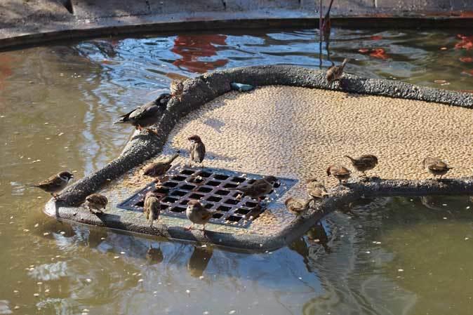 冬の上野動物園~ベニイロフラミンゴの若鳥と不忍池冬景色(January 2019)_b0355317_12005099.jpg