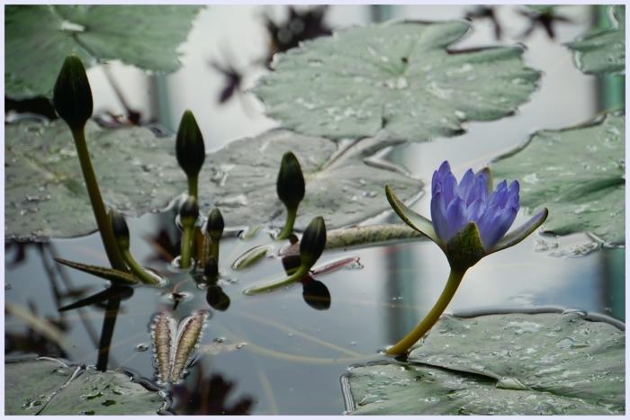 ■ 水面を飾る_b0148920_18225463.jpg