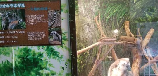♪2020年★初ドライブは「シャボテン動物公園」へ_d0162225_23114901.jpg