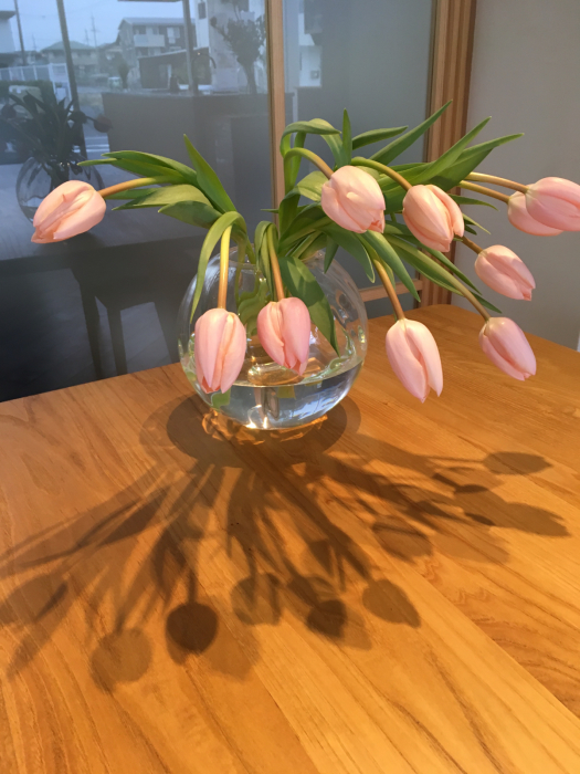お正月から春へ、ディスプレイ_f0155431_21334471.jpg