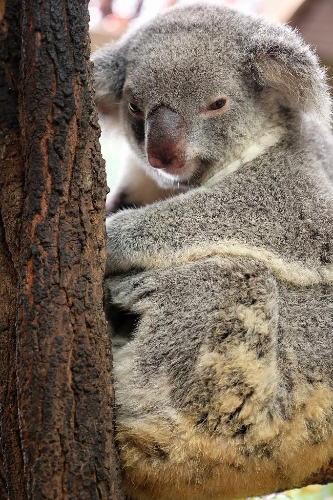 オーストラリア 森林火災 募金のためのチャリティー作品販売_f0050534_07380836.jpg