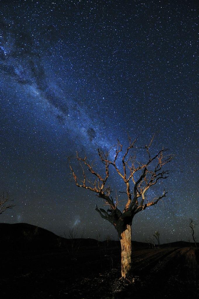 オーストラリア 山火事被害募金 チャリティー作品販売_f0050534_07484446.jpg
