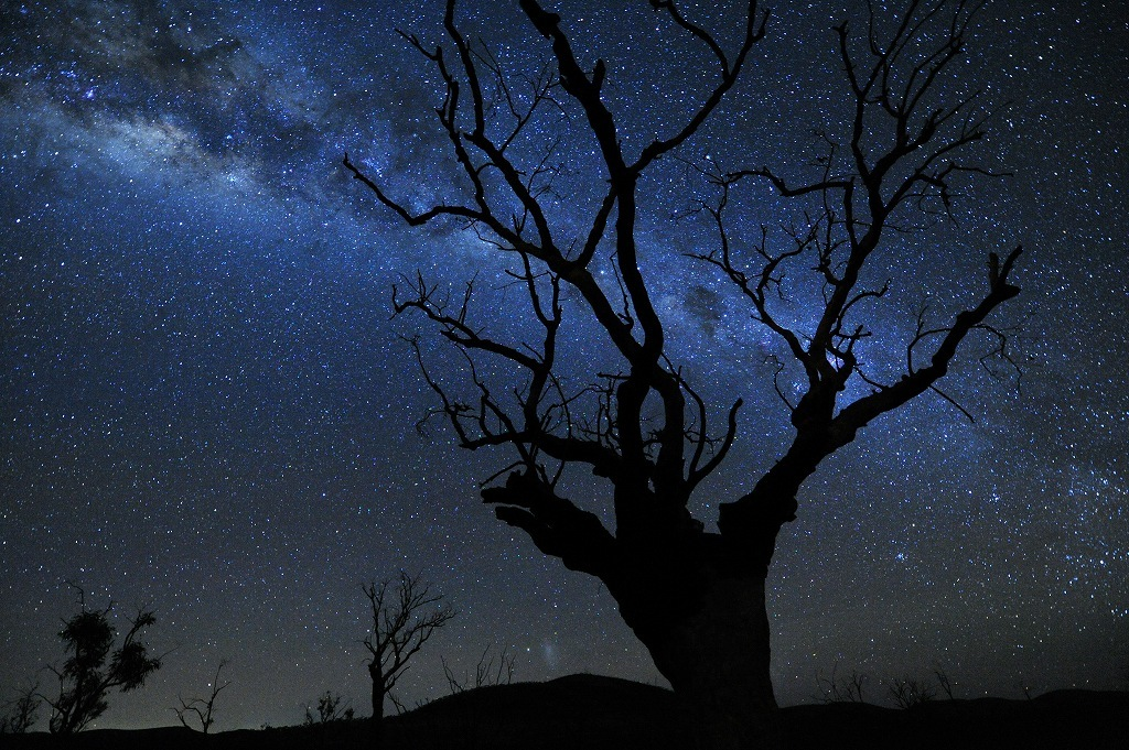 オーストラリア 森林火災 募金のためのチャリティー作品販売_f0050534_07484501.jpg
