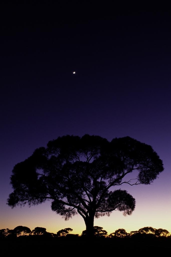オーストラリア 森林火災 募金のためのチャリティー作品販売_f0050534_07522351.jpg