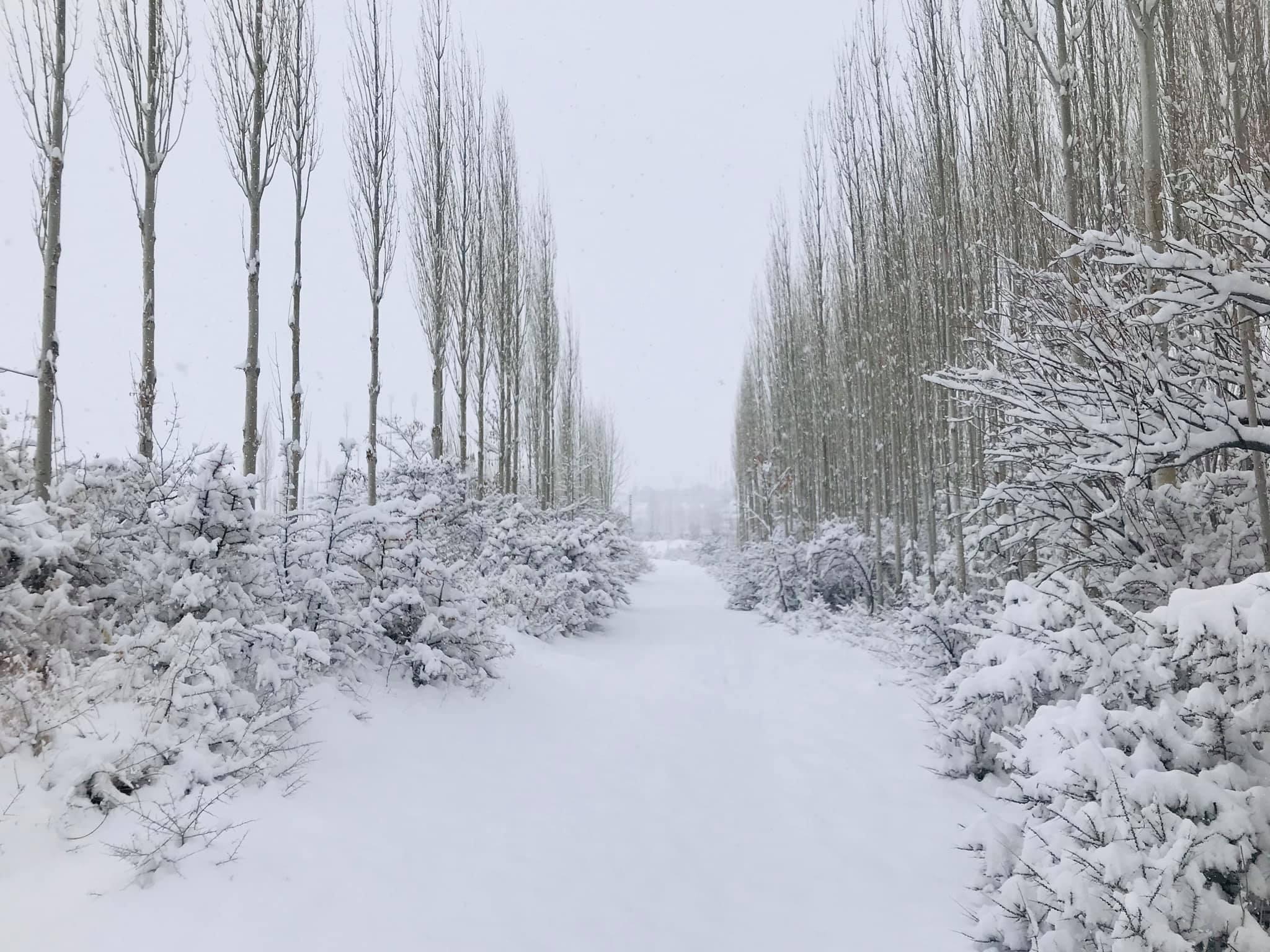 フンザ 静かな静かな冬 雪がどっさり 2020_d0106555_16001087.jpg