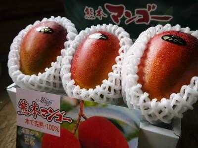 完熟アップルマンゴー 匠の判断でこの暖冬での育て方は変えています_a0254656_06032410.jpg