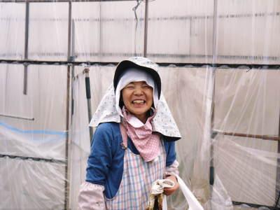 完熟アップルマンゴー 匠の判断でこの暖冬での育て方は変えています_a0254656_06352842.jpg