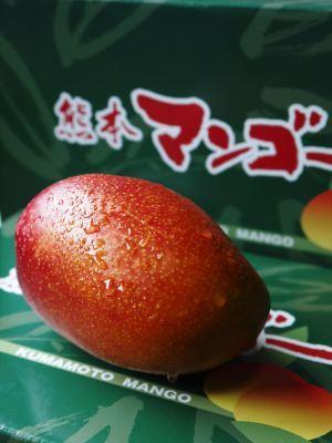 完熟アップルマンゴー 匠の判断でこの暖冬での育て方は変えています_a0254656_06410069.jpg