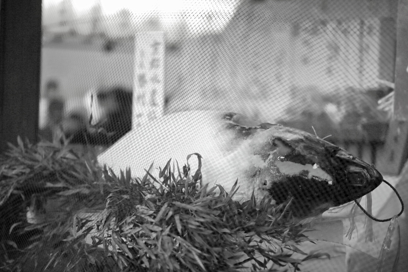 京都ゑびす神社_c0196076_23084602.jpg