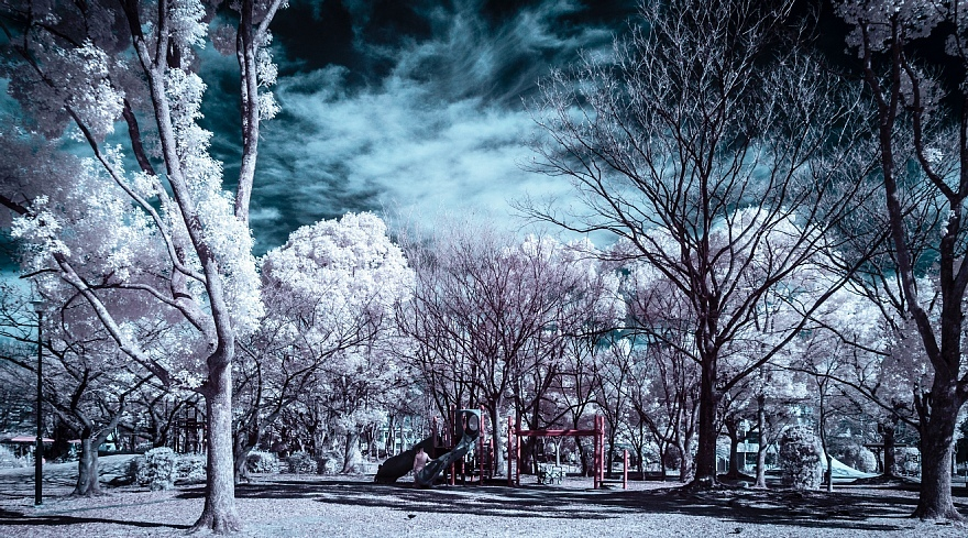 偽総天然色に彩られた公園_d0353489_19272493.jpg