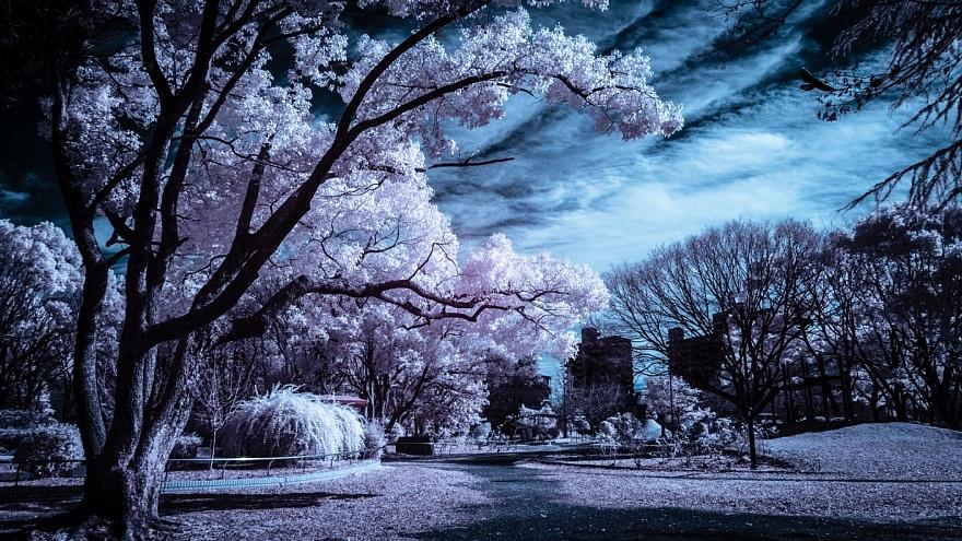 偽総天然色に彩られた公園_d0353489_19272757.jpg