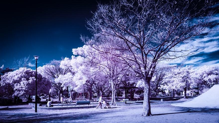 偽総天然色に彩られた公園_d0353489_19273049.jpg