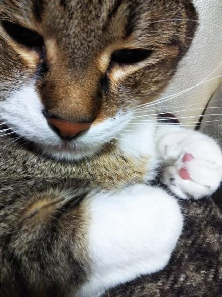 猫の時間割_f0316507_22411195.jpg