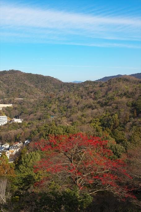 尾長山のタマミズキ(2020/01/11)_b0393210_02113442.jpg
