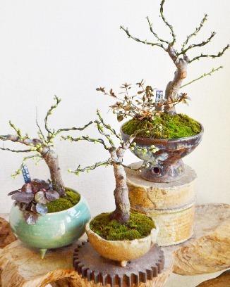 新春盆栽展はじまりました_d0263815_16240868.jpg