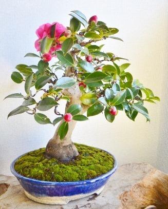 新春盆栽展はじまりました_d0263815_16244373.jpg