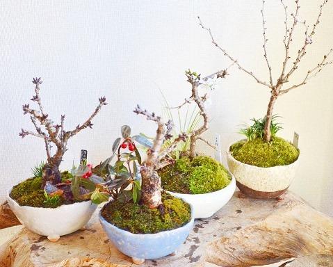 新春盆栽展はじまりました_d0263815_16245968.jpg