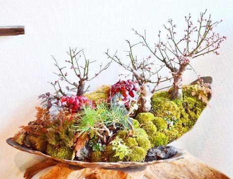 新春盆栽展はじまりました_d0263815_16262029.jpg