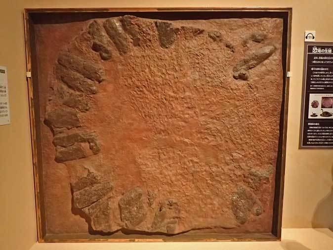 恐竜博2019:身を寄せ合うオヴィラプトル類とロミオ&ジュリエット_b0355317_15091194.jpg