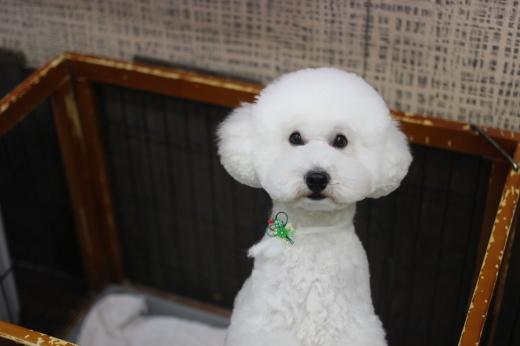 1月7日ご来店のワンちゃんです!!_b0130018_09123924.jpg