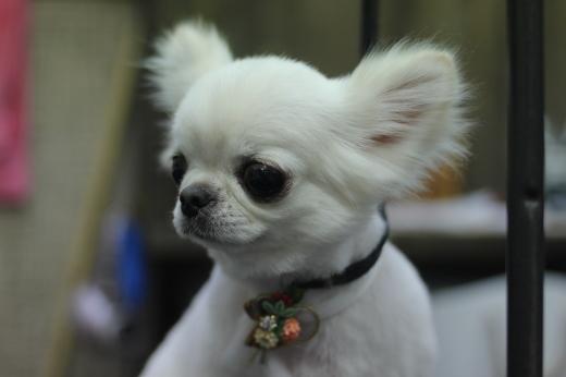 1月8日ご来店のワンちゃんです!!_b0130018_09403581.jpg