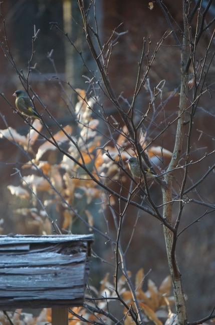 厳冬の森仕事_d0348118_21473628.jpeg
