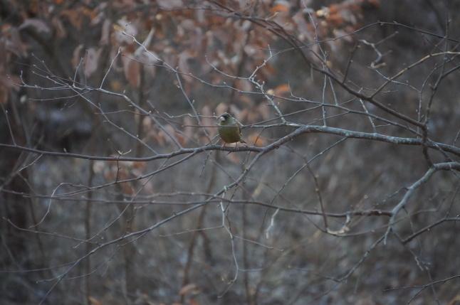 厳冬の森仕事_d0348118_21484129.jpeg