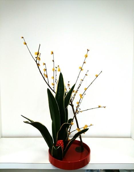 正月花 🎍 _c0165824_17054610.jpg