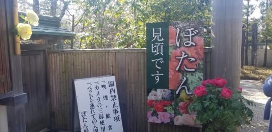 ♪2020年★鎌倉散策_d0162225_20511758.jpg