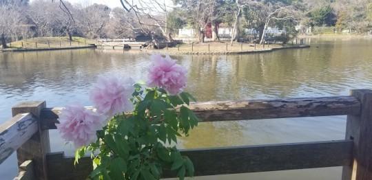 ♪2020年★鎌倉散策_d0162225_20513425.jpg