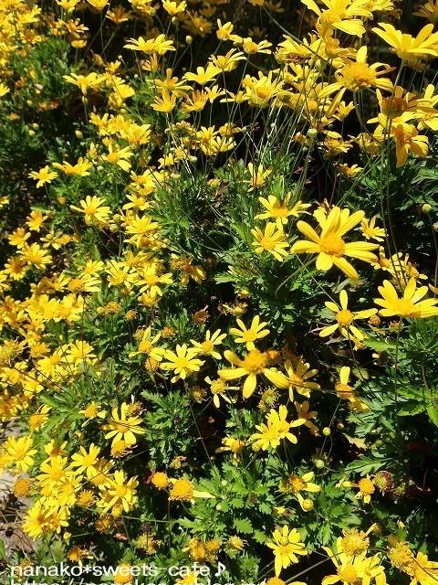 お散歩*黄色い花_d0147030_20225155.jpg