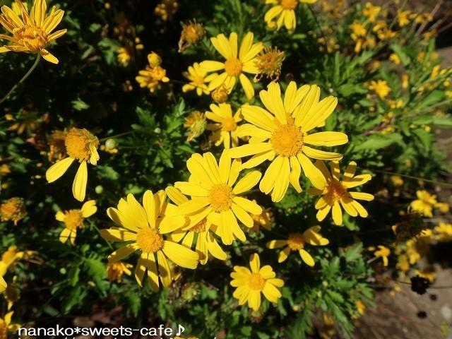お散歩*黄色い花_d0147030_20225435.jpg
