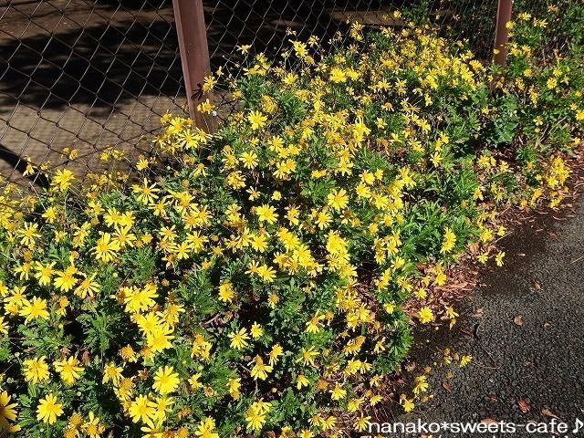 お散歩*黄色い花_d0147030_20225735.jpg