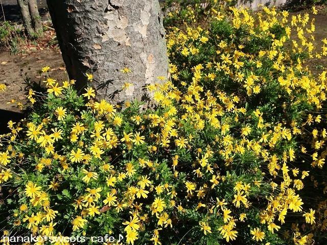 お散歩*黄色い花_d0147030_20225980.jpg