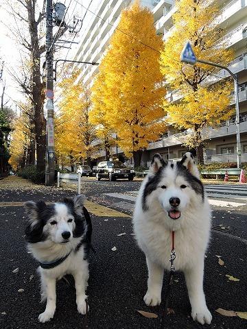 散歩屋日誌【30】_c0062832_14463797.jpg