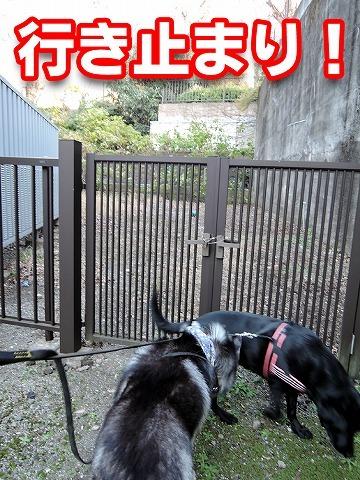 散歩屋日誌【30】_c0062832_14463808.jpg