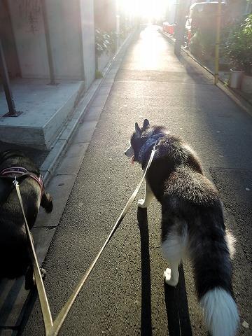 散歩屋日誌【30】_c0062832_14463867.jpg